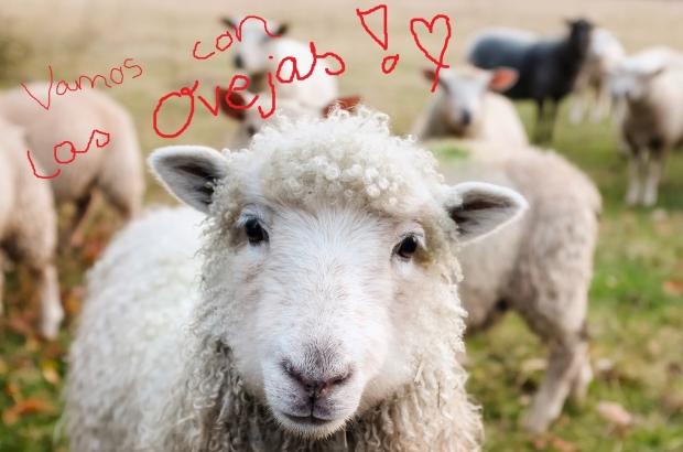 Vamos con las ovejas!